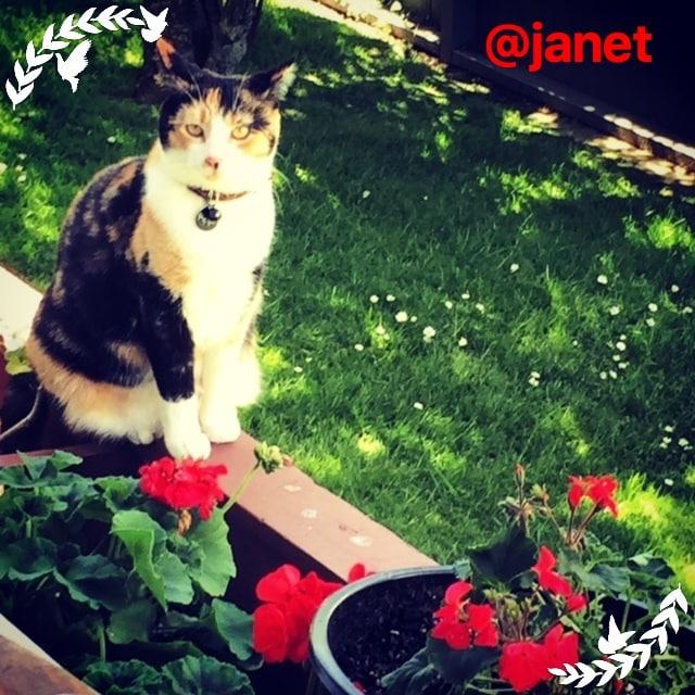 janet_Fotor