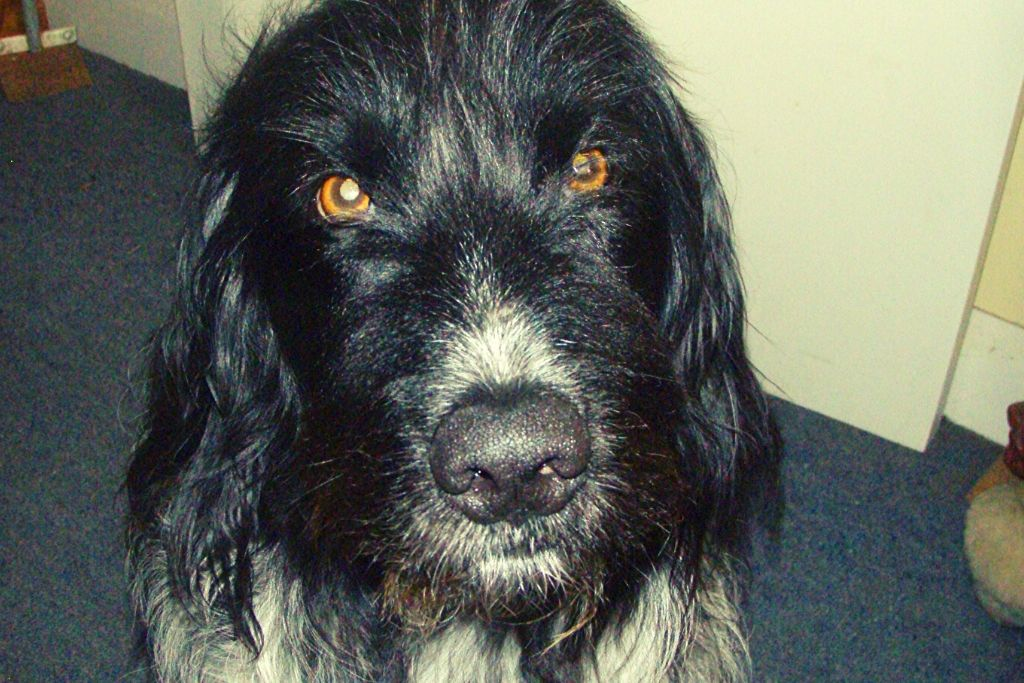 Gorgeous old dog