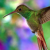 Avatar of hummingbird